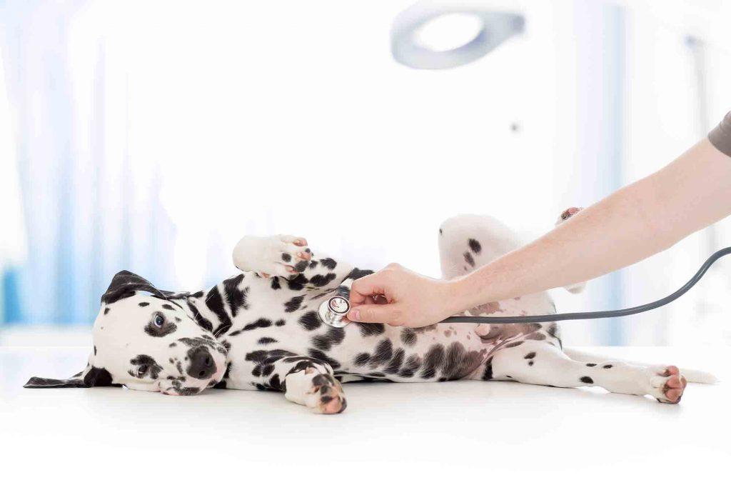 pet gastroenterology