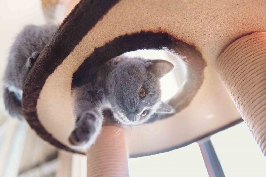 Cat enrichment keeps your cat happy and promotes cat health