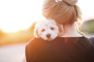 heartworm pet wellness care