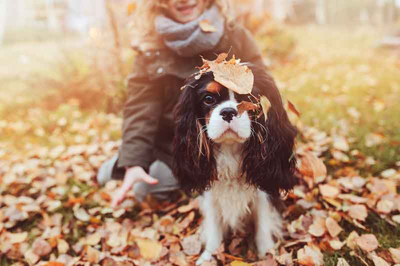 Fall pet safety will keep your pet your pet safe from antifreeze poisoning.