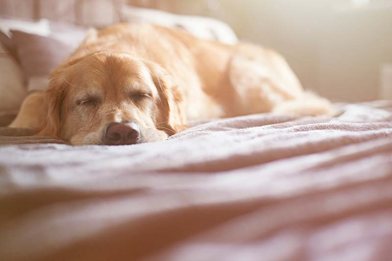 Pet pain can have a tremendous impact on pet health and happiness