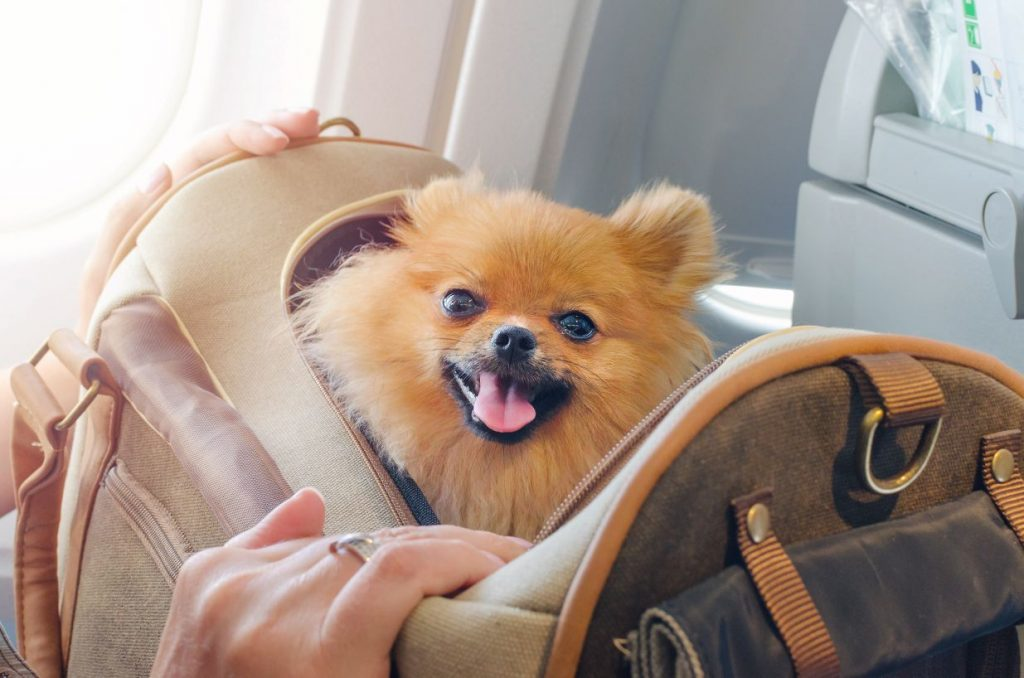 Traveling with a pet.