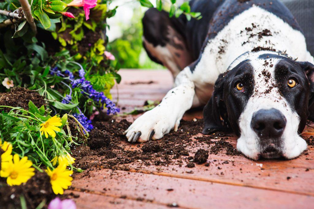 Dog in garden.