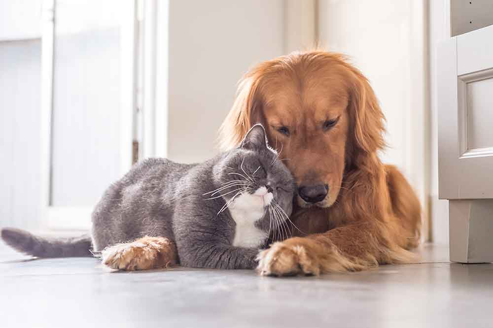 Dog and cat nuzzling